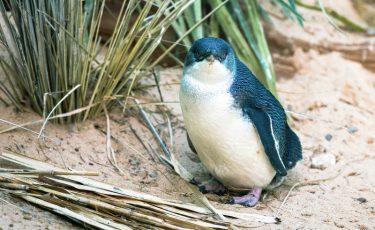 ペンギン・ハイウェイってどんな映画?作品の感想を書いてみた。